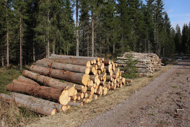 varastopinoja metsäautotien varrella