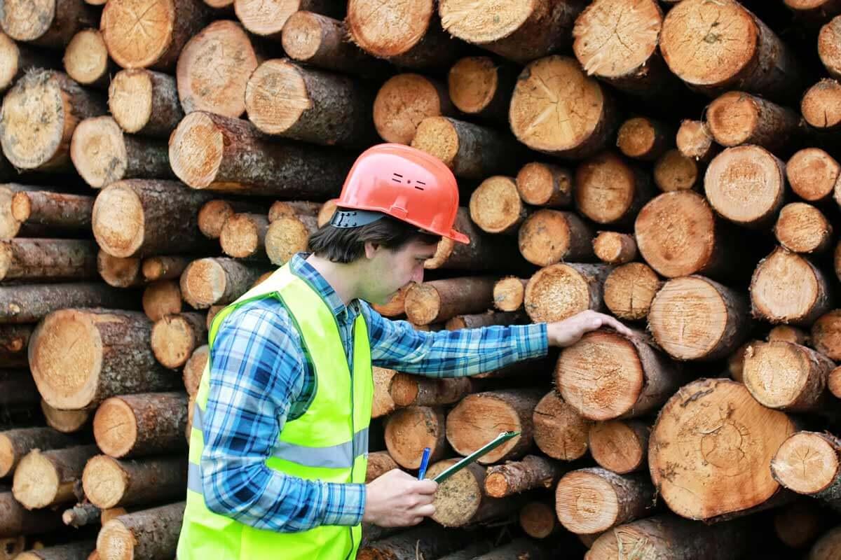 Nuori mies mittaamassa puupinoa.