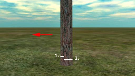 Järeimpien puiden kaadossa vaaditaan kaksi tai kolme sahausta. Kuvan puu kaadetaan vasemmalle. Tee ensin vastasahaus (1.) ja vasta sitten kaatosahaus kohti kaatosuuntaa (2.).