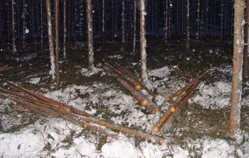 Sektorityömallin työjälki metsässä.