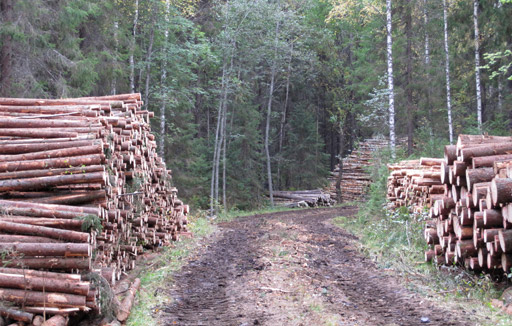 Varastopaikalla eri puutavaralajit tulee sijoittaa omiin kasoihinsa.