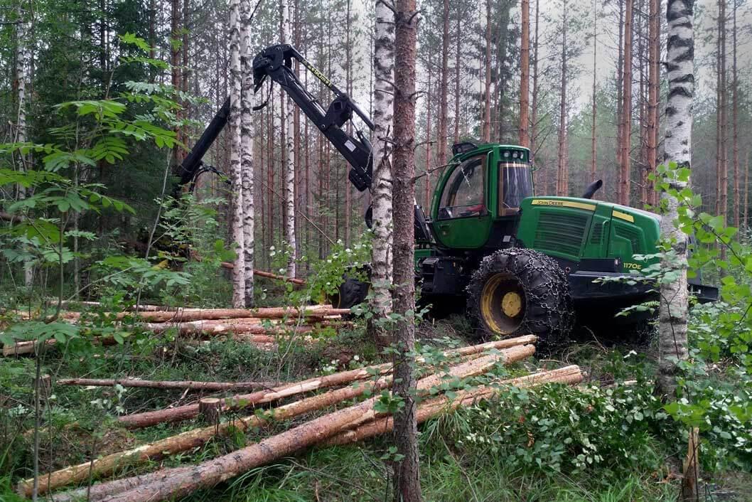 Metsäkone tekemässä kasvatushakkuuta koivu-mänty-sekametsässä, jossa on tiheikköjä.