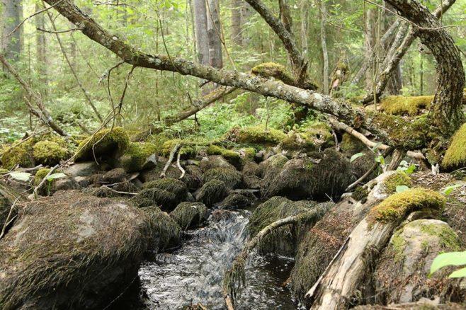 Puro metsän keskellä.