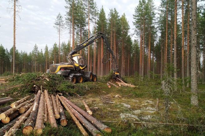 Metsäkone tekemässä uudistushakkuuta kuivalla kankaalla mäntymetsässä.
